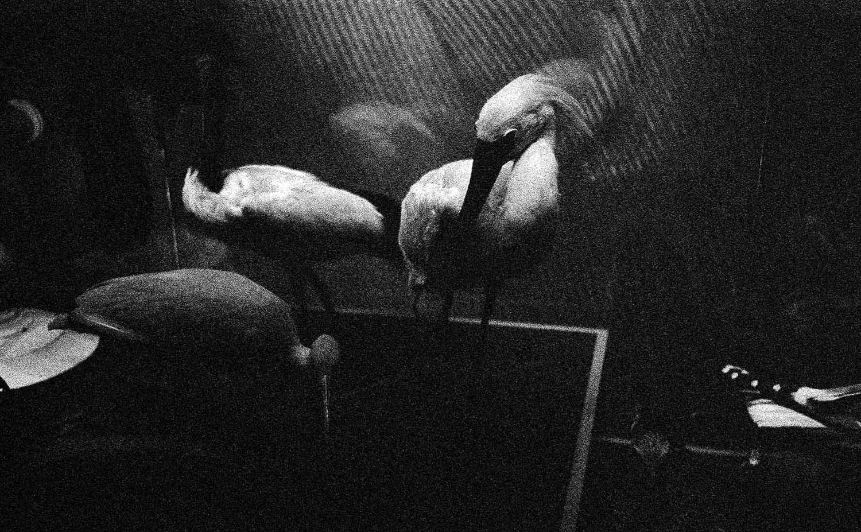 <em>Les oiseaux, printemps 2015</em>