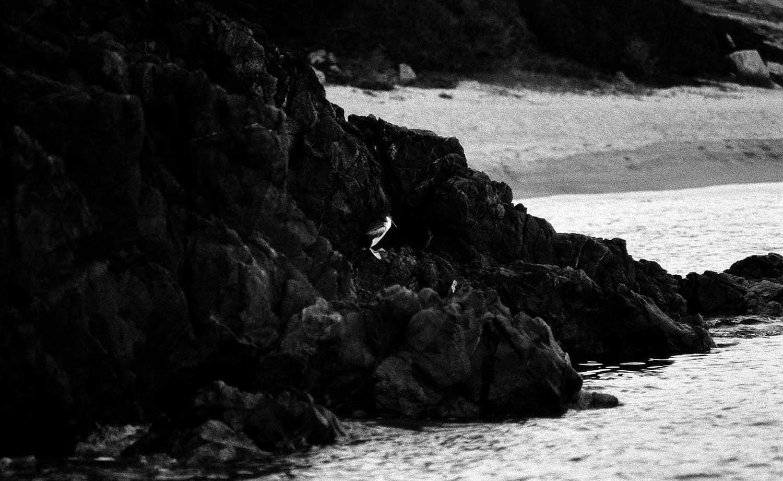 <em>La Crique, automne 2014</em>