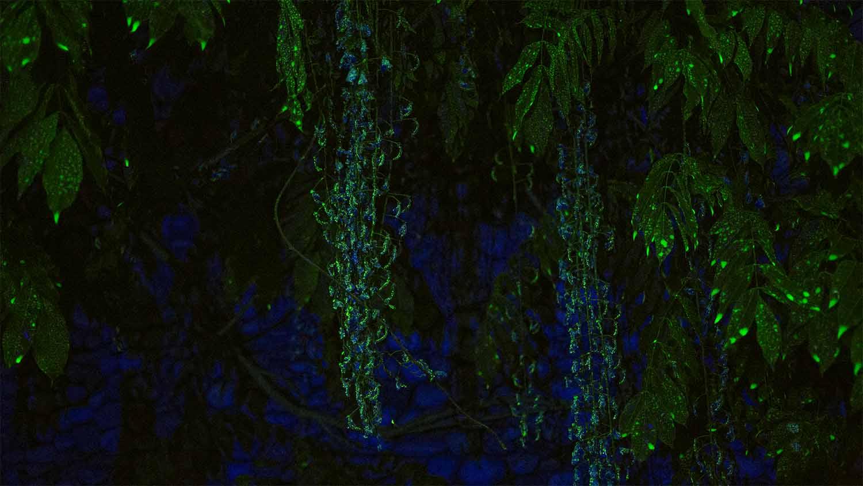 Sans titre, 2015 <br>vidéo (fluorescéine, eau, plantes, lumière noire) <br>9'46