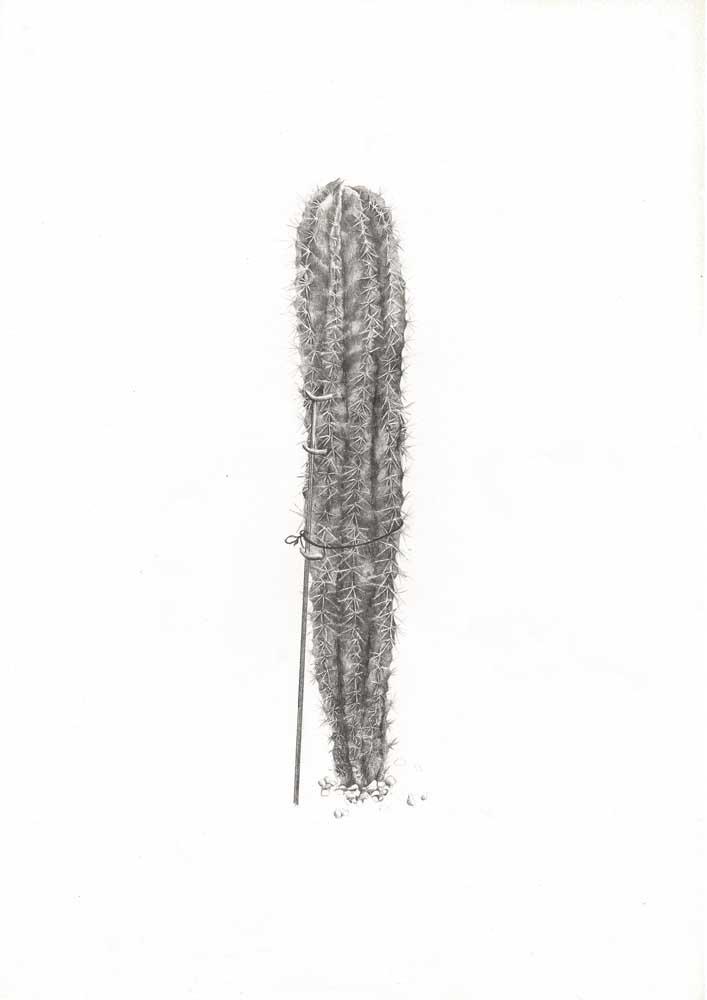 <em>Cactus fatigué</em>, 2013 <br>crayon sur papier <br>21 x 29,7 cm